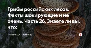 Заговор на грибы, 3 заговора на сбор грибов