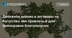 Заговор на денежное дерево