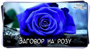 Заговор на подаренную мужчиной розу на любовь